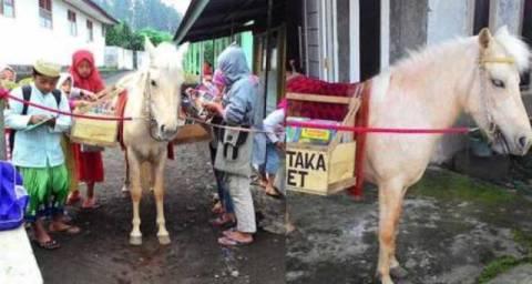 Kuda Poni Pustaka dari Purbalingga Jawa Tengah
