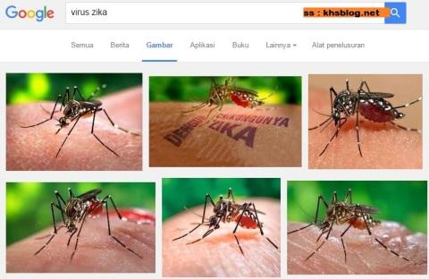 mengenal virus zika yang dibawa nyamuk aedes aegypti