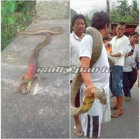 ular naga bertanduk di ponorogo adalah hoax