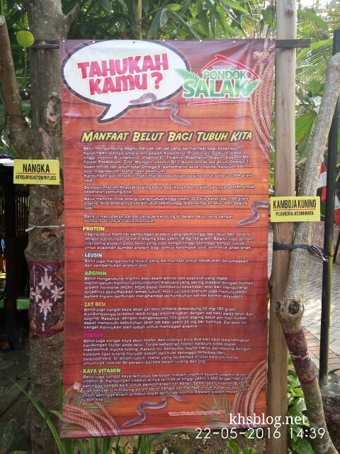 jatimotoblog kuliner belut di desa bendo kapas Bojonegoro ~04