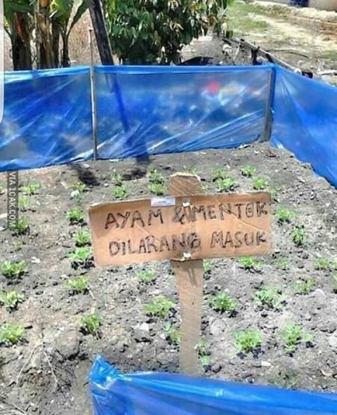 tulisan pithik dilarang mencakar gabah dan merusak tanaman~01