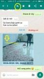 """Whatsapp kini ada fitur """"Quick Quotes""""…monggo dicoba"""