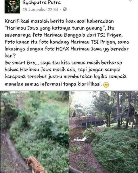 hoax penampakan Harimau Jawa di Prigen, Pasuruan
