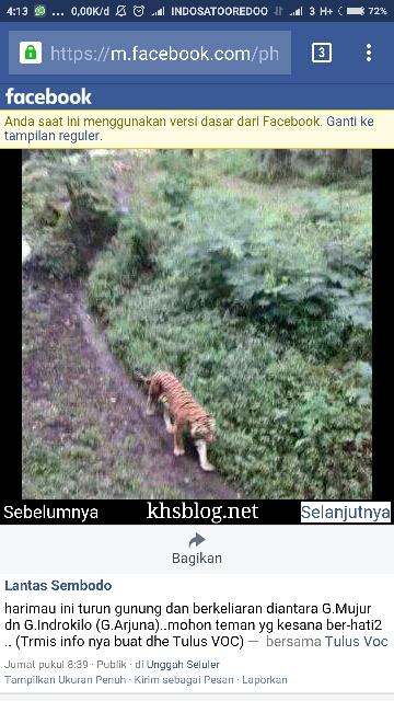penampakan diduga Harimau Jawa di Gunung Arjuno 2016~01