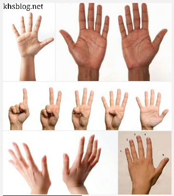 gambar-jari-tangan-asli