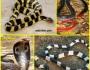 Mimpi digigit ular, apatandanya?