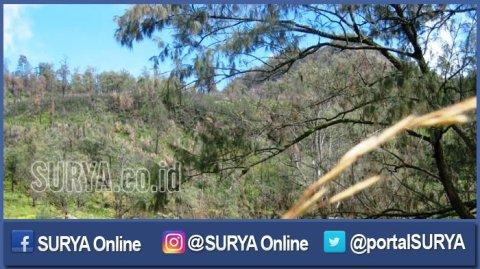 berita-pasuruan-lembah-kijang-alas-lali-jiwo-gunung-arjuno_20161214_100656