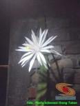 mitos-seputar-bunga-wijaya-kusuma-6