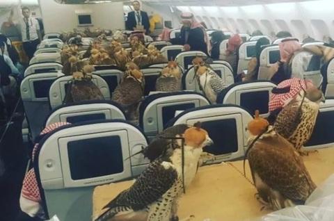 80-burung-elang-naik-pesawat-qatar-airways-tahun-2017