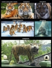 kumpulan meme macan cisewu tahun 2017 (3)
