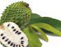 Selain menyembuhkan asam urat, ini manfaat lain daun sirsakgans…