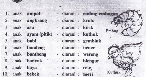 nama anak hewan dalam bahasa jawa