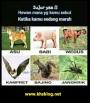 Ragam nama hewan, fauna atau binatang yang disebut kala marah, anda yang nomorberapa?
