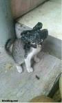 Kucing jadi-jadian ambil uang,benarkah?