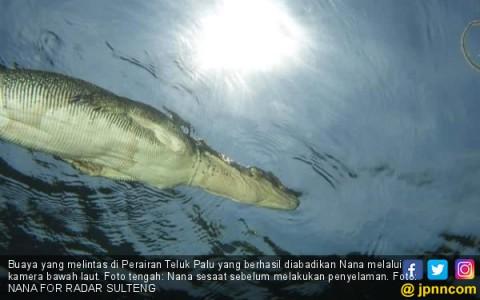 buaya-yang-melintas-di-perairan-teluk-palu-yang-berhasil-diabadikan-nana-melalui-kamera-bawah-laut-foto-tengah-nana-sesaat-sebelum-melakukan-penyelaman-foto-nana-for-radar-sulteng