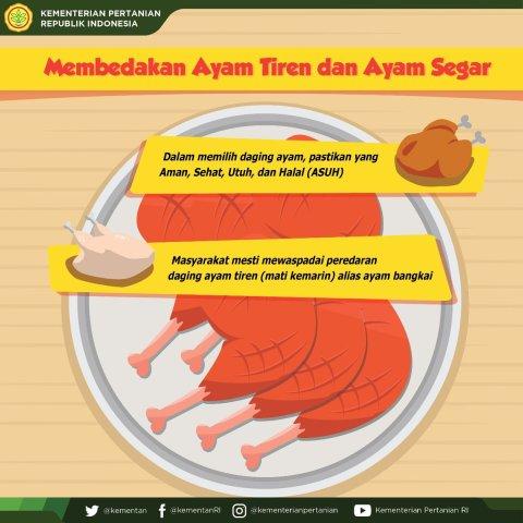 Perbedaan Ayam Segar, Ayam Suntikan, Ayam Tiren dan Ayam Berformalin