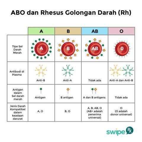 abo-rhesus-darah-swiperx-1024x1024