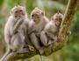 Cerita tentang monyet dan 3 angin besar besertakedahsyatannya